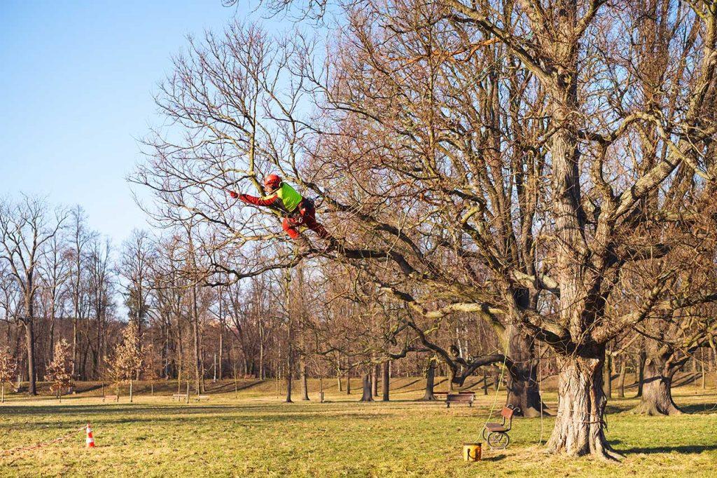TREE SURGEONS IN ESHER